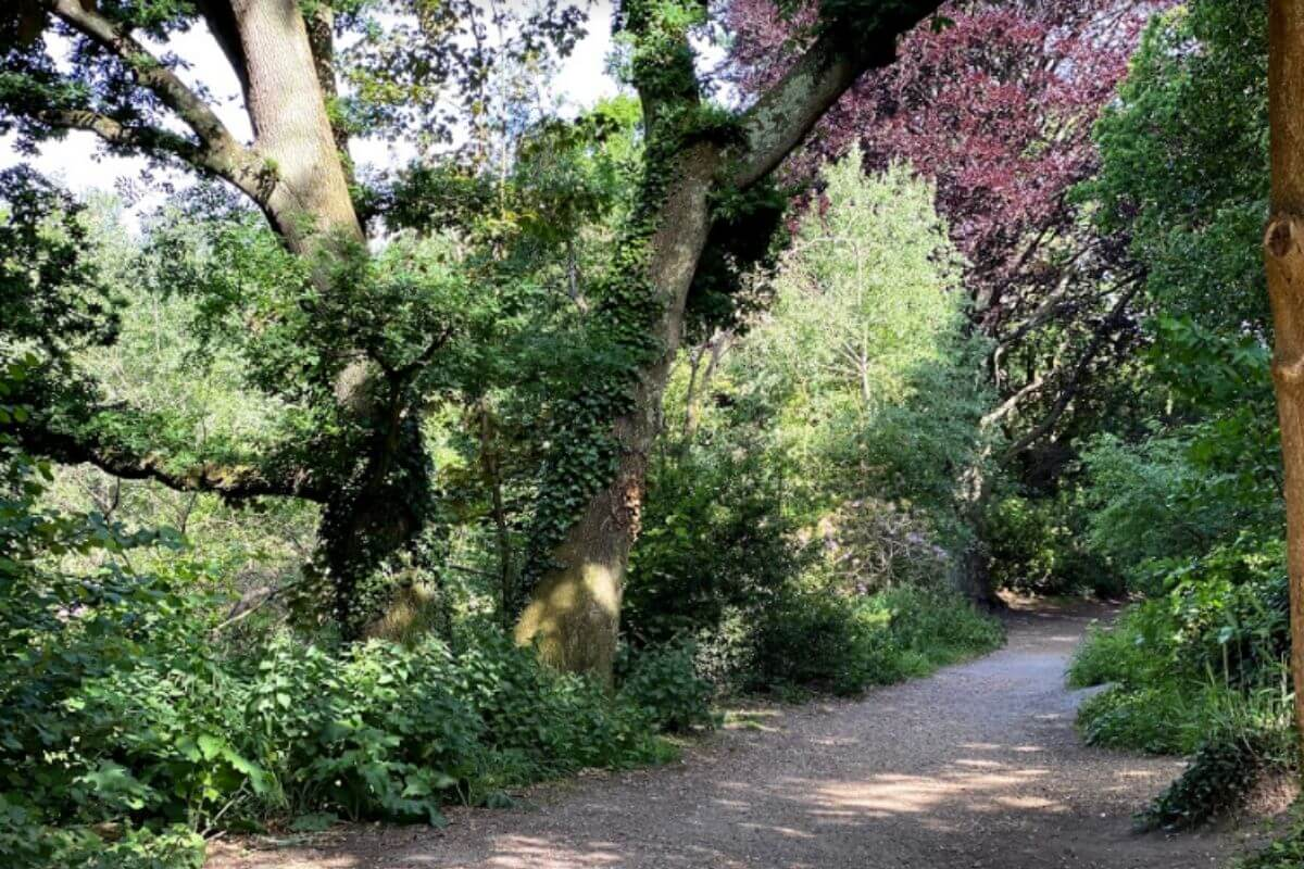 Plants and trees on a path