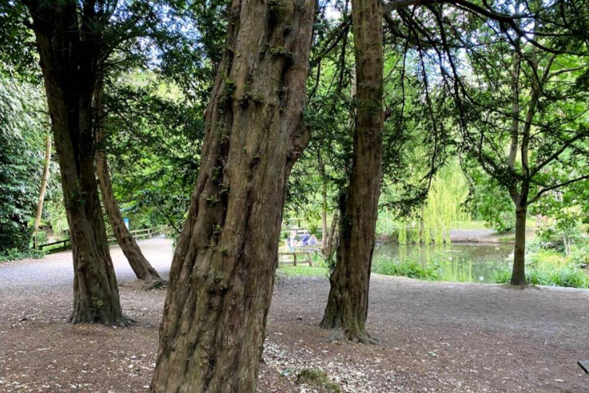 Three trees leading to the lake