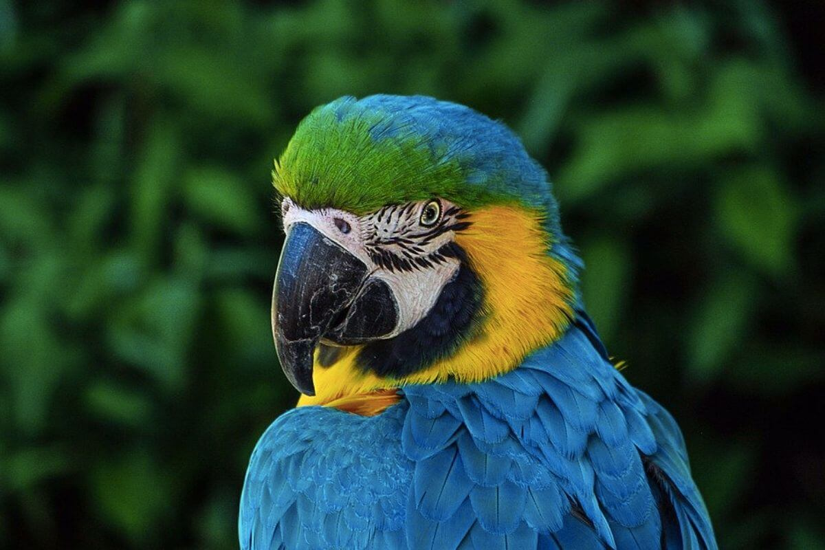 Parrot looking at the camera