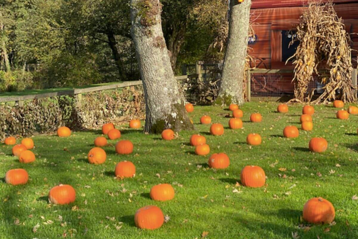 Pumpkins scattered around Paultons Park