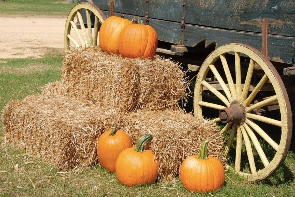 Pumpkins scattered around a cart and a hay stack
