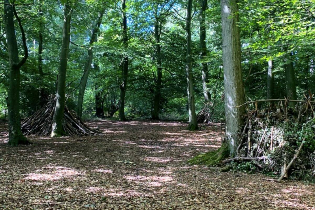 Alice Holt Country Park forest