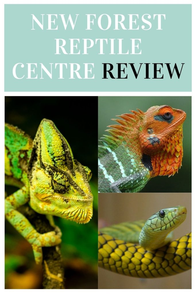 New Forest Reptile Centre is a great place to let the kids explore exotic reptiles for free. Open during the spring and summer by Laura at Things to do in Hampshire with kids